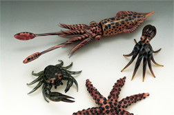Grouping of Squid, Octopus, Crab and Starfish